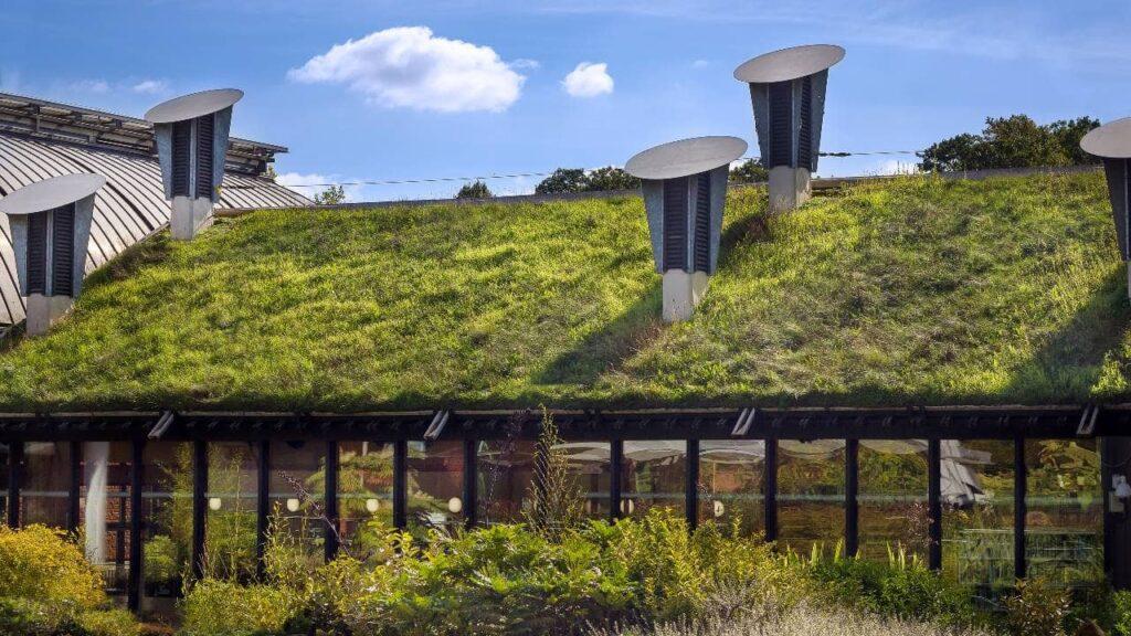 Dom z żywym, zielonym dachem
